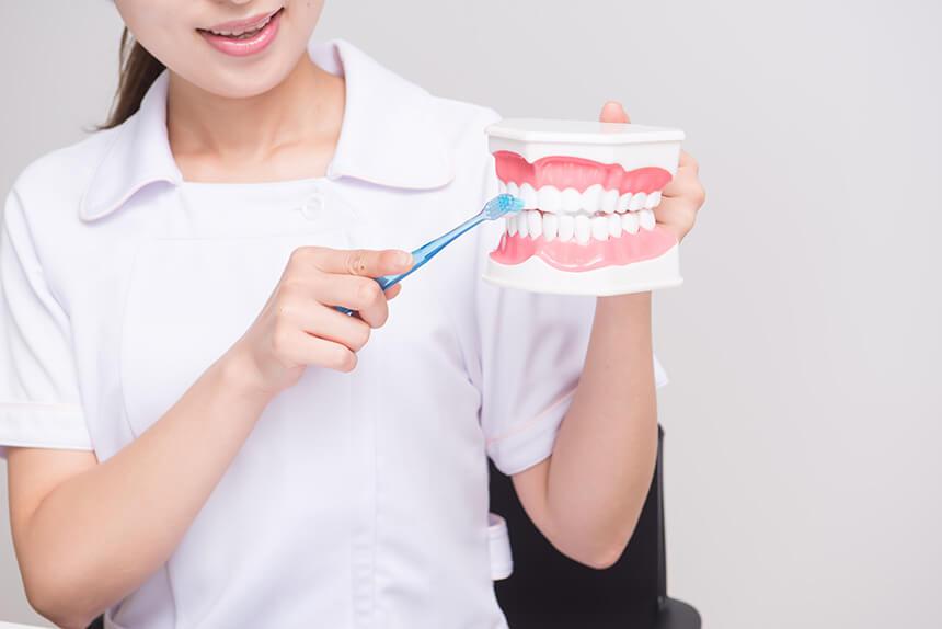歯科衛生士になるには大学?専門学校?費用や通う年月、カリキュラムの違い